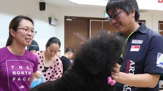 Charlene & Anna Debut Dog Show in Singapore | Miniature Poodle Group 9