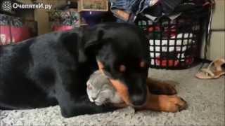 Собаки и кошки друзья!
