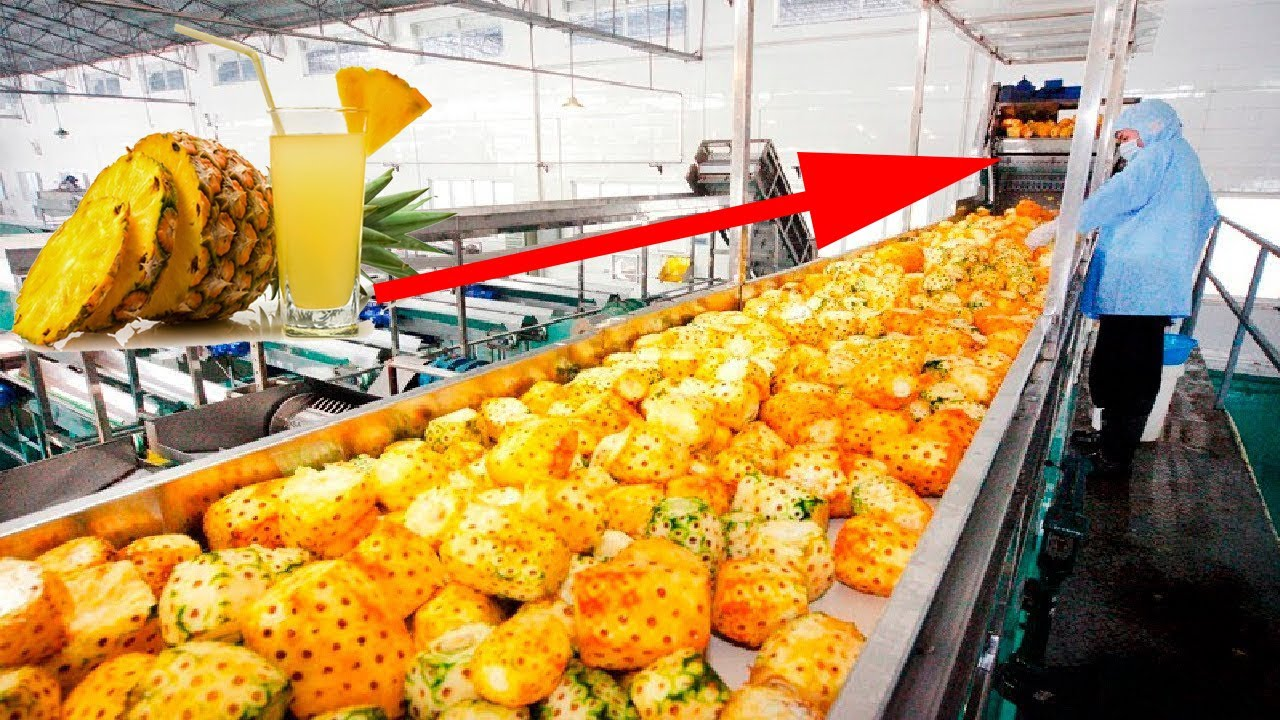 Download Pineapple Juice Production Process Inside the Factory, The Best Modern Food Processing Machines