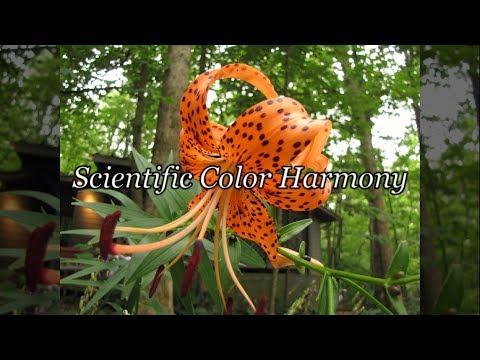 Quick Tip 122 - Scientific Color Harmony