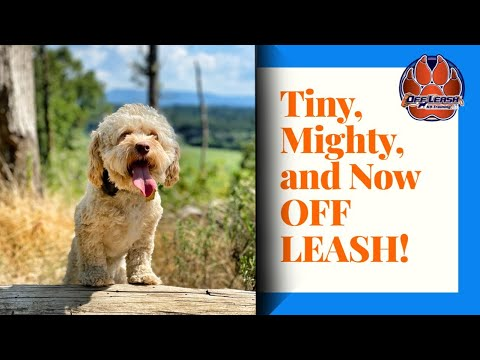 Knoxville Dog Trainers  Tiny but Mighty and Now OFF LEASH!