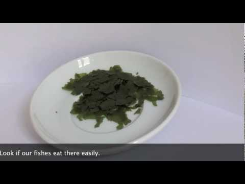 Feeding Test with Spirulina Premium by JBL