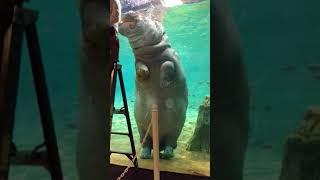 Hippo Awareness Weekend 2018-Training