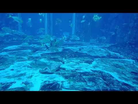 Stingray, Sharks Dubai Aquarium Underwater Zoo Dubai Mall 4k video