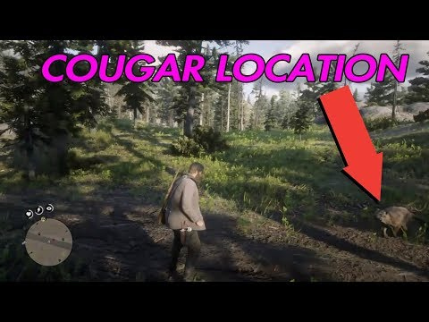 RED DEAD REDEMPTION 2 HOW TO FIND A COUGAR / COUGAR LOCATION