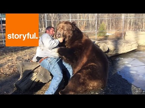 Giant Bear Plays with Human Carer (Storyful, Cute)
