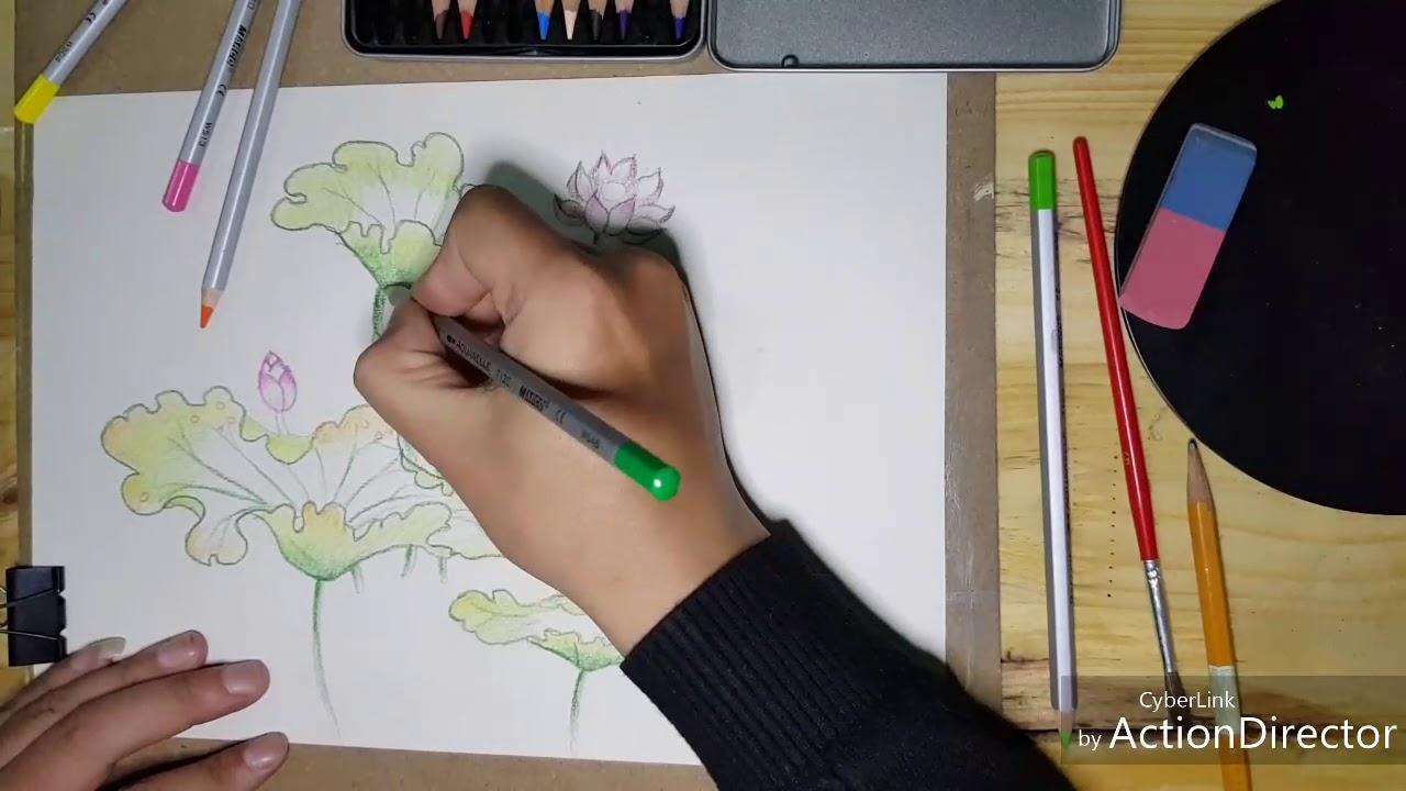 Hướng dẫn vẽ Hoa Sen đơn giản trên giấy bằng màu nước