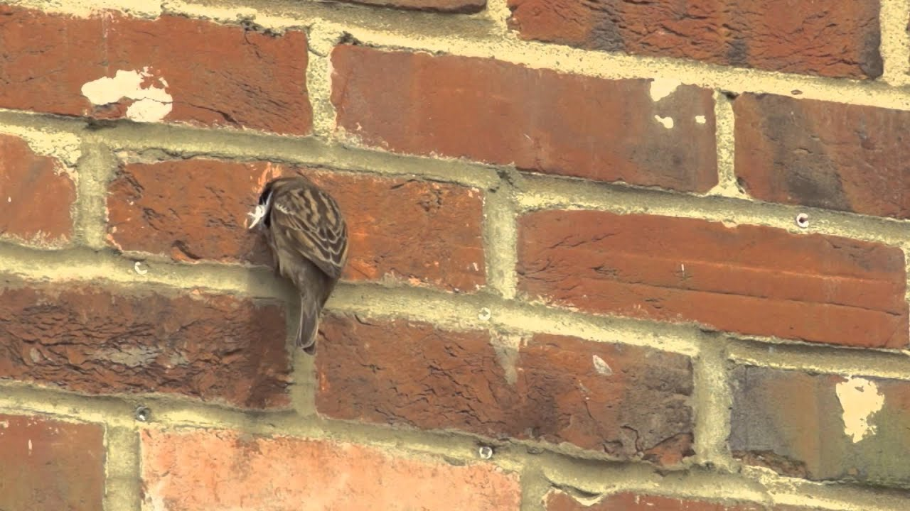 Bird Brick Houses Bird Amp Bat Nesting Sites Youtube