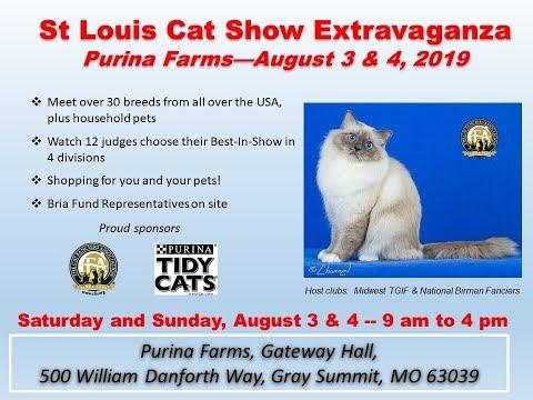 STL Cat Show Extravaganza