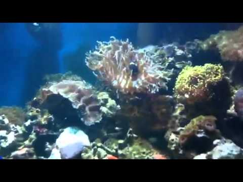 Why Do Freshwater Aquariums Become Cloudy   How To Save Money And Do