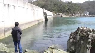 錦海湾のメバリング