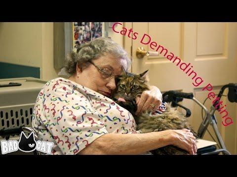 Cute Cats Demanding Petting Compilation Part 1