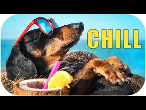 Are you waste summer?! Funny dachshund dog video!