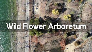 경기도 양평여행, 들꽃…