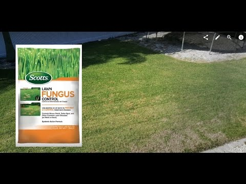 Review about Scotts 6.75 lb. Ready-to-Use Lawn Fungus Control from Home Depot