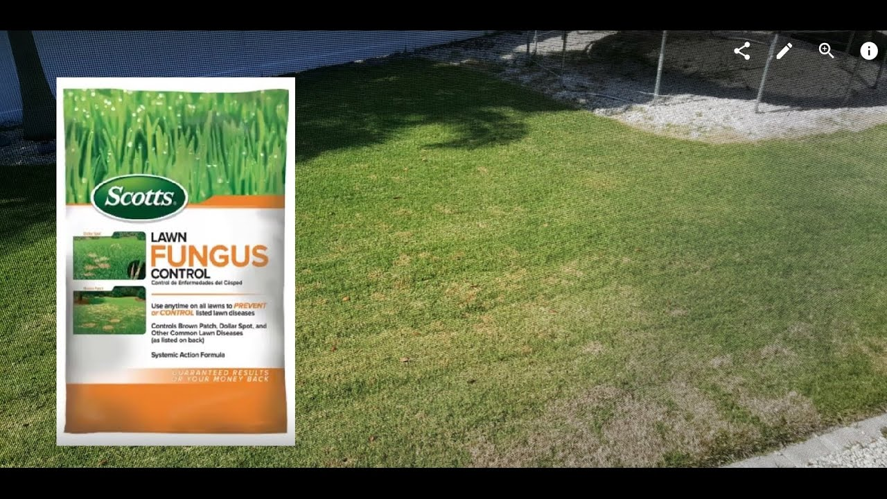 Review about Scotts 6 75 lb  Ready-to-Use Lawn Fungus Control from Home  Depot
