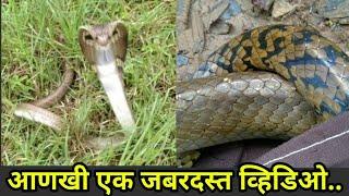 हा नाग तर अंगावरच धावून आला..पहा एकेक सापांचा स्वभाव कसा असतो.. snakes release to jungle..