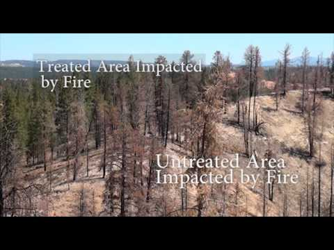 Fuels Project Saves Homes from Wildfire in Southern Utah in the greater Duck Creek Area