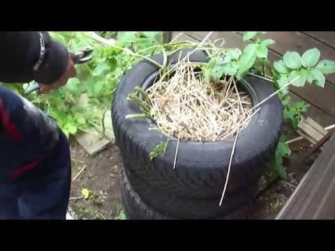 25 test d 39 une tour pommes de terre youtube - Faire germer pomme de terre ...