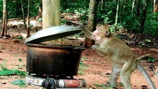 Amazing Monkey Cooking In The Jungle A:696