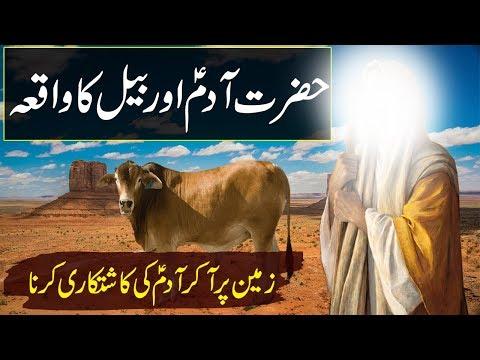 Hazrat Adam A.s Aur Janwar | Prophet Adam A.s & A OX | Qisasul Anbya Rohail Voice