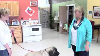 Dog Training Correction Techniques For 16 Cents