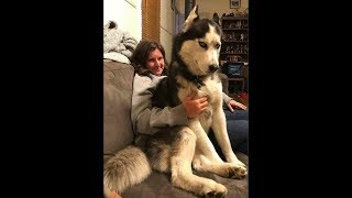 Dogs and cats & owners are the best friends #2 - Funny Cat and Dog compilation