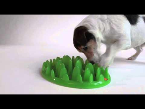 Lamellennapf Catch Green - Interaktiver Fressnapf für Hunde und Katzen | Kölle Zoo