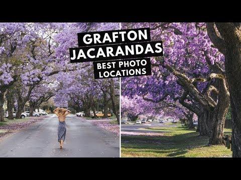 Grafton Jacaranda Festival Australia