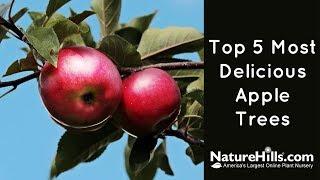 Gambar cover Top 5 Most Delicious Apple Trees   NatureHills.com