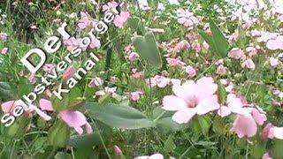 Ein Gemuesegarten Anfang Juli Rundgang Teil 1
