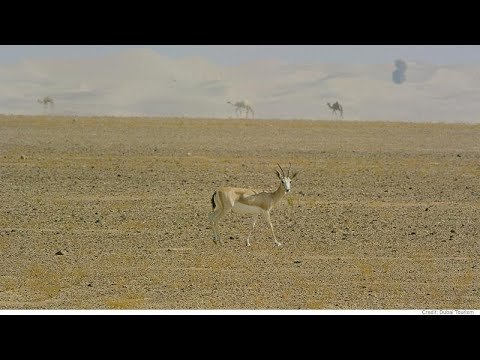 """Animal conservation """"a government priority"""" says United Arab Emirates"""