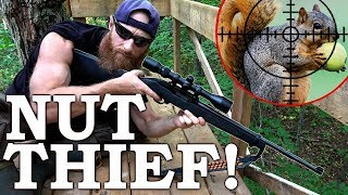 SQUIRREL Catch, Clean, and Cook | 'WORLD'S BEST Hunt Stand!'