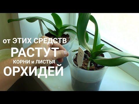 ПИТАТЕЛЬНЫЙ ПОЛИВ ОРХИДЕЙ от какого средства растут корни и листья ОРХИДЕИ быстрее?