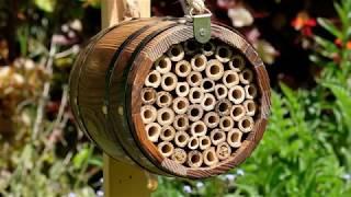 Wildlife World tønde til bier video