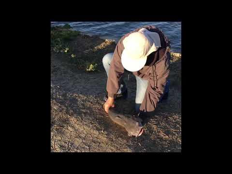 2019 Lake Elizabeth Fishing