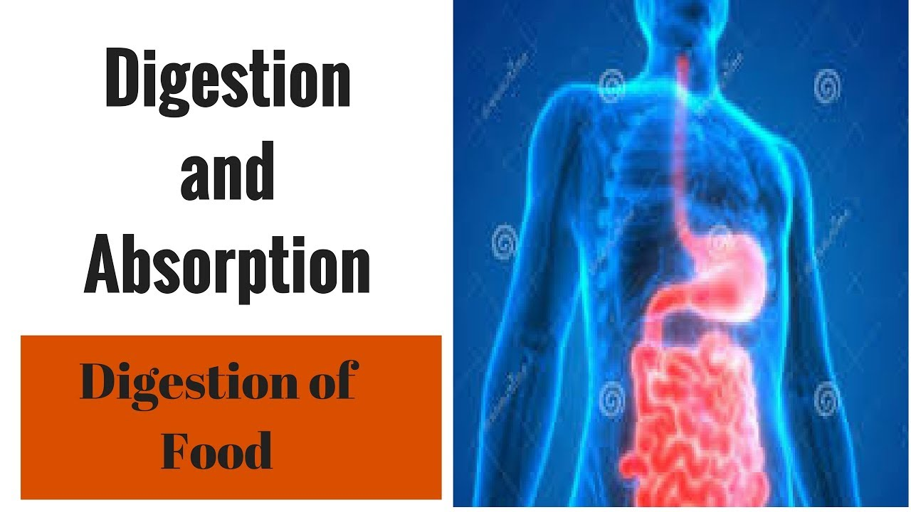 digestion and food When you have indigestion or other digestive disorders, avoid foods that are hard to digest, such as spicy food also make good food choices.