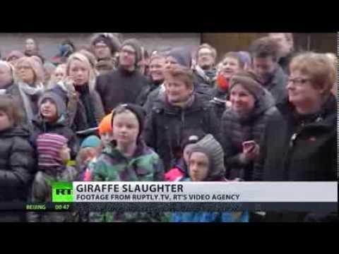 Russia condemns 'inhumane' giraffe killing in Danish zoo