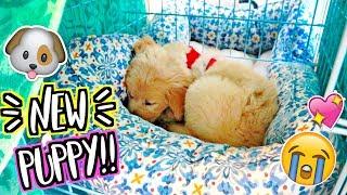 OMG NEW PUPPY!!! AlishaMarieVlogs