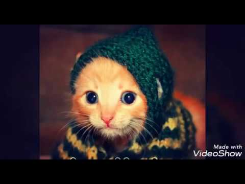 Cute Cats Funny Jumping Videos | Cats Best funny Videos in 2017