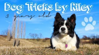 Amazing Dog Tricks by Riley [3 Years Old]