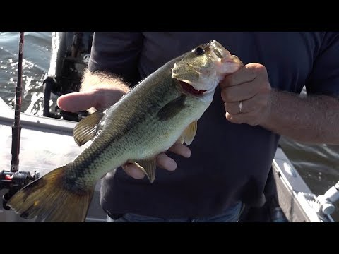 Amazing Mixed Bag Fishing On Houghton Lake