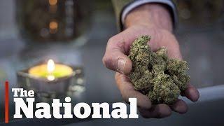 Government tables marijuana legislation