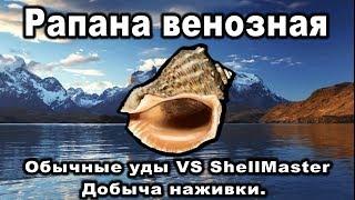 Русская Рыбалка 3. Рапана венозная. Наживка рапана