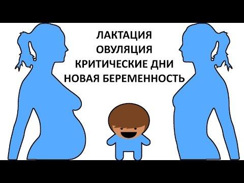 Как узнать беременность при грудном вскармливании