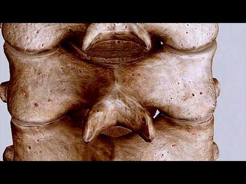 3D Facet Orientation || Cervical, Thoracic, Lumbar Spine #OMM #COMLEX #WeDaBest