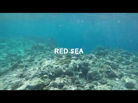 Snorkelling in the Red Sea / Travel Video / GoPro