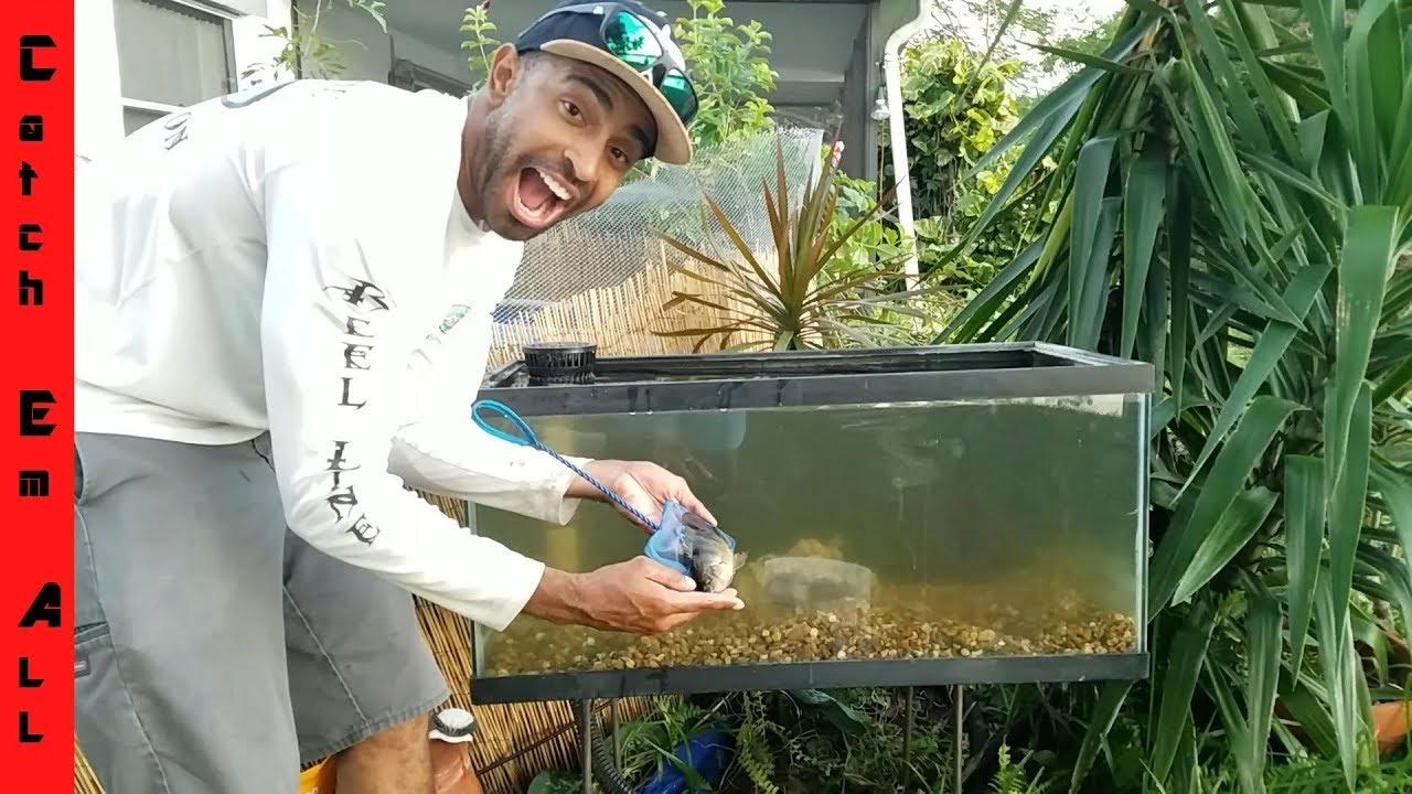 Build outdoor fish tank diy aquarium youtube for Outdoor fish tank