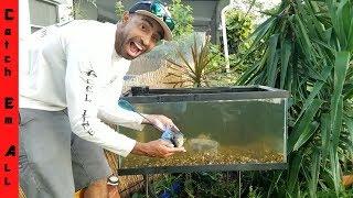 Build Outdoor Fish Tank DIY Aquarium