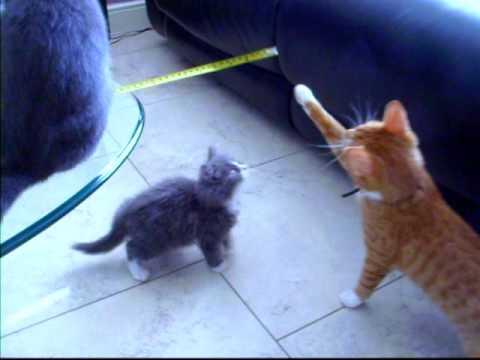 DIY CATS & KITTENS
